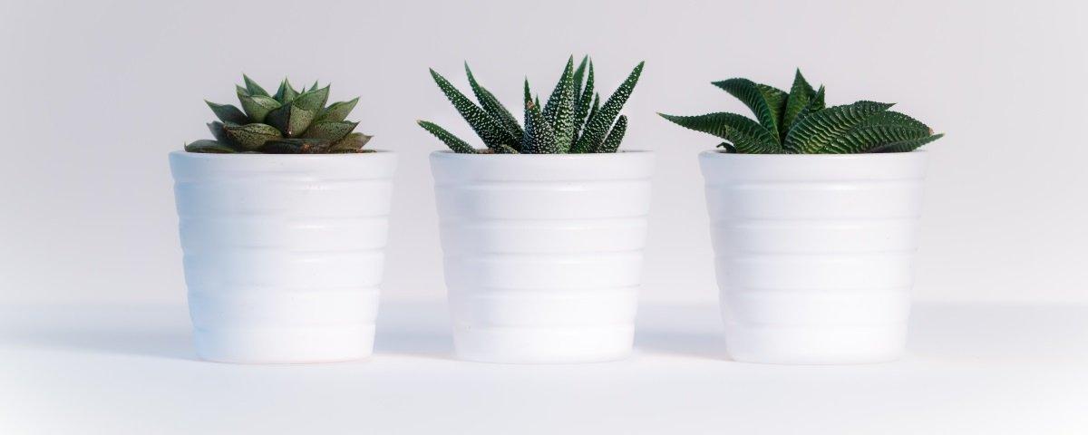 Tem Na Web - 10 dicas para evitar que as suas plantas morram antes da hora