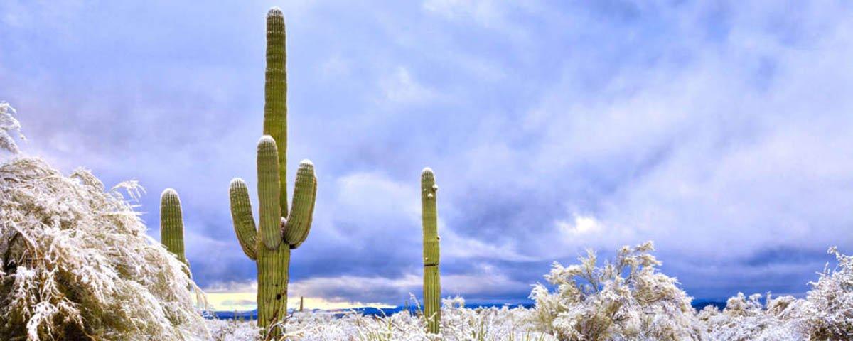 Nevou no Deserto do Arizona, nos EUA, e as fotos são espetaculares