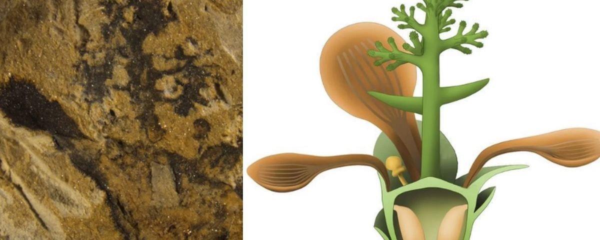 Jurassic Flor: cientistas descobrem fóssil da mais antiga pétala da Terra