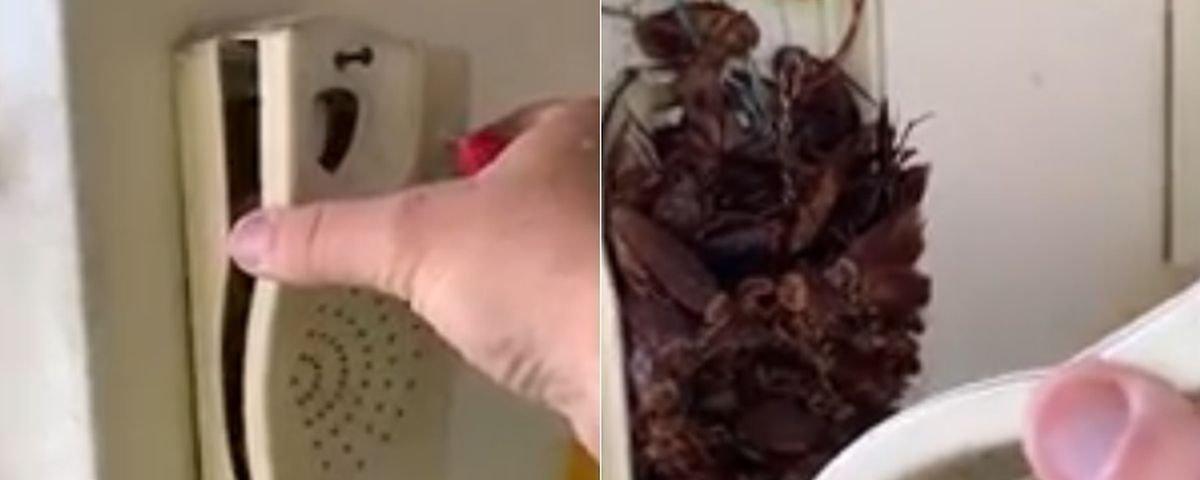 Eca! Homem encontra dezenas de baratas mortas dentro de interfone antigo