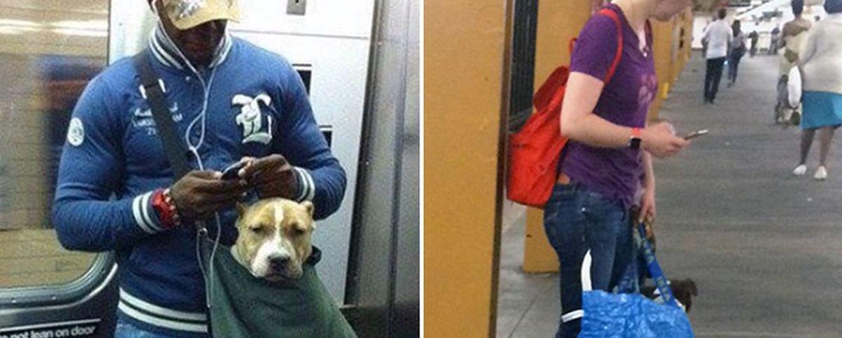 13 pessoas que burlaram a regra de não levar cães no metrô de Nova York
