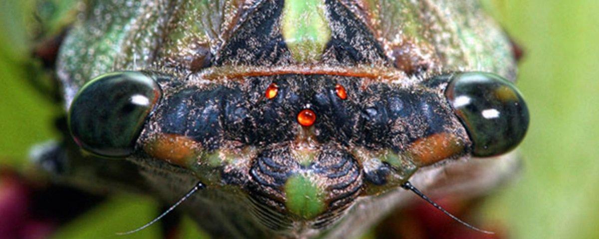 E os insetos, será que eles também fazem xixi?