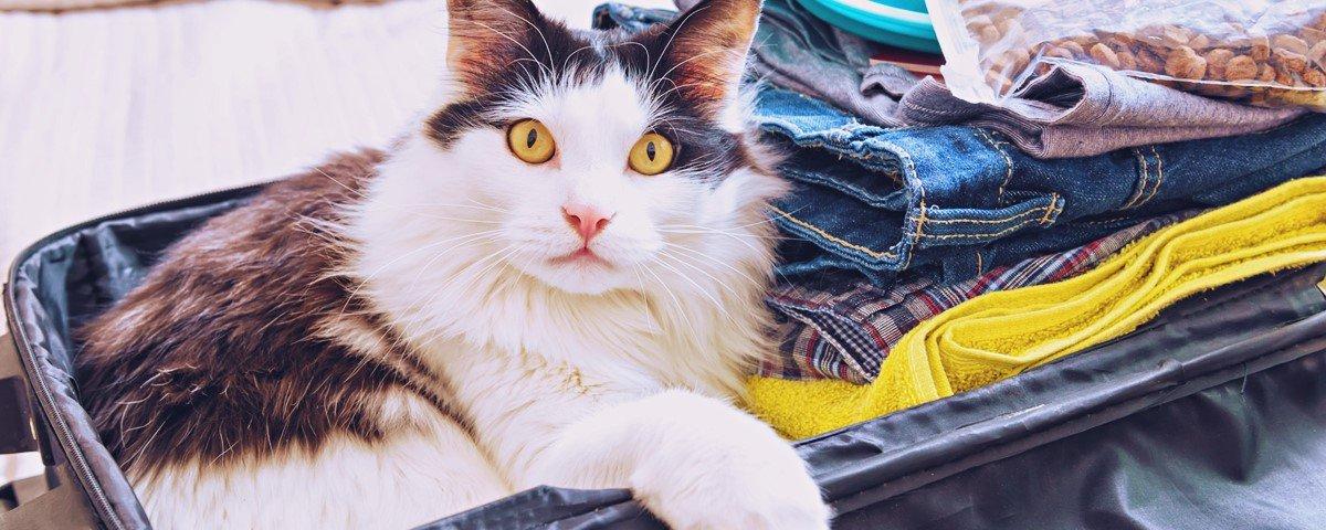 22 provas de que gatos e mesas de vidro são uma combinação perfeita