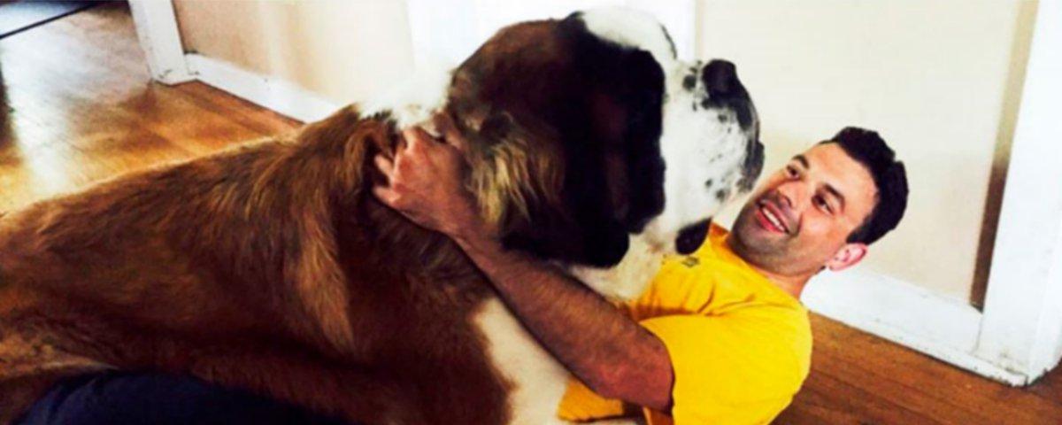 15 antes e depois de cachorrinhos que vão te surpreender - Parte 1