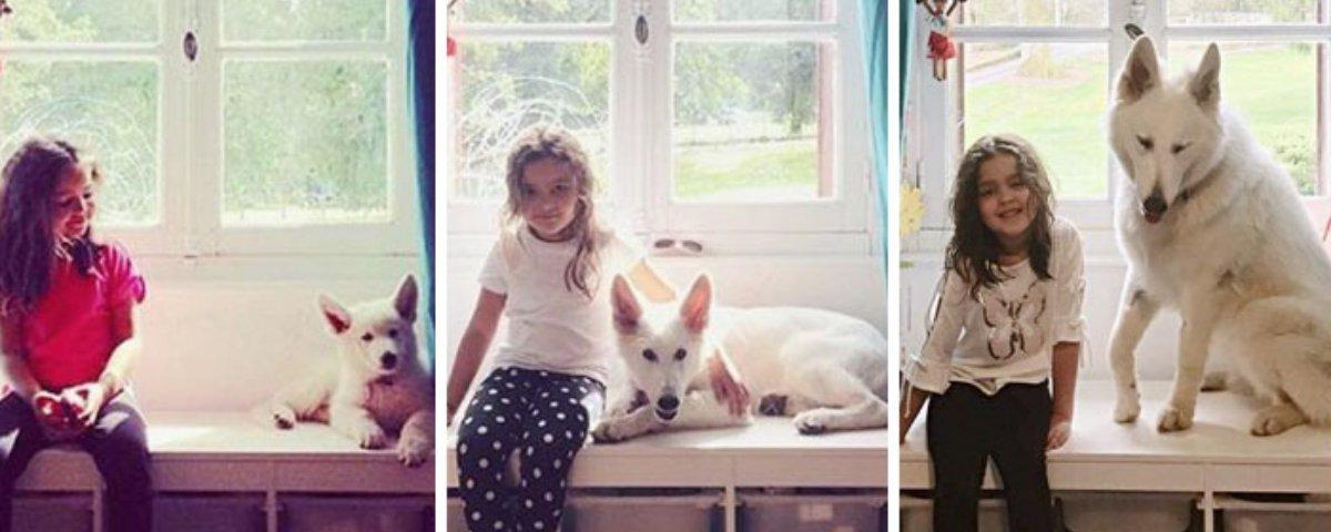 Tem Na Web - 15 antes e depois de cachorrinhos que vão te surpreender - Parte 2