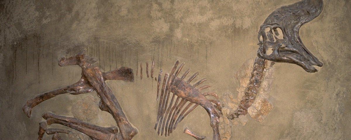 Os cientistas têm um truque bem curioso para diferenciar fósseis de rochas