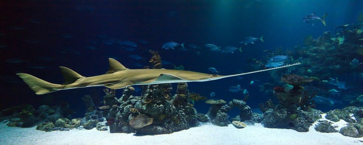 Diferença de temperatura da água pode criar novas espécies marinhas