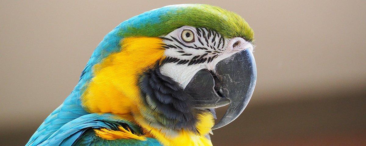 Mudanças climáticas podem afetar interações entre espécies