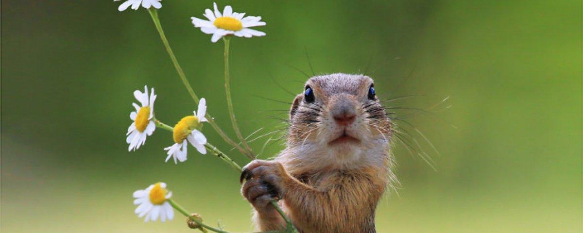 15 fotos incríveis de animais fofos que foram premiadas