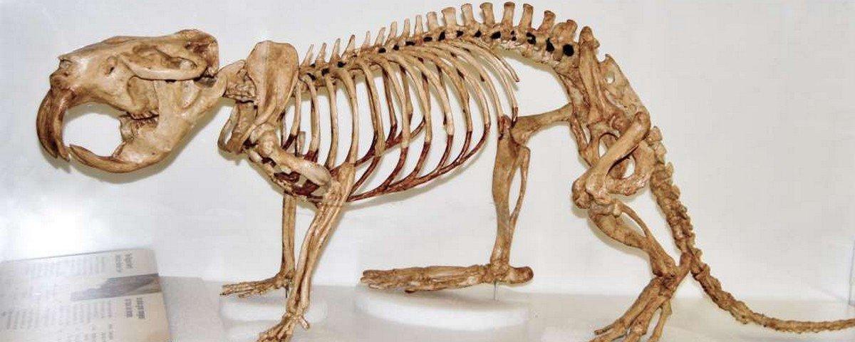 Saiba por que os castores gigantes não sobreviveram à Era Glacial