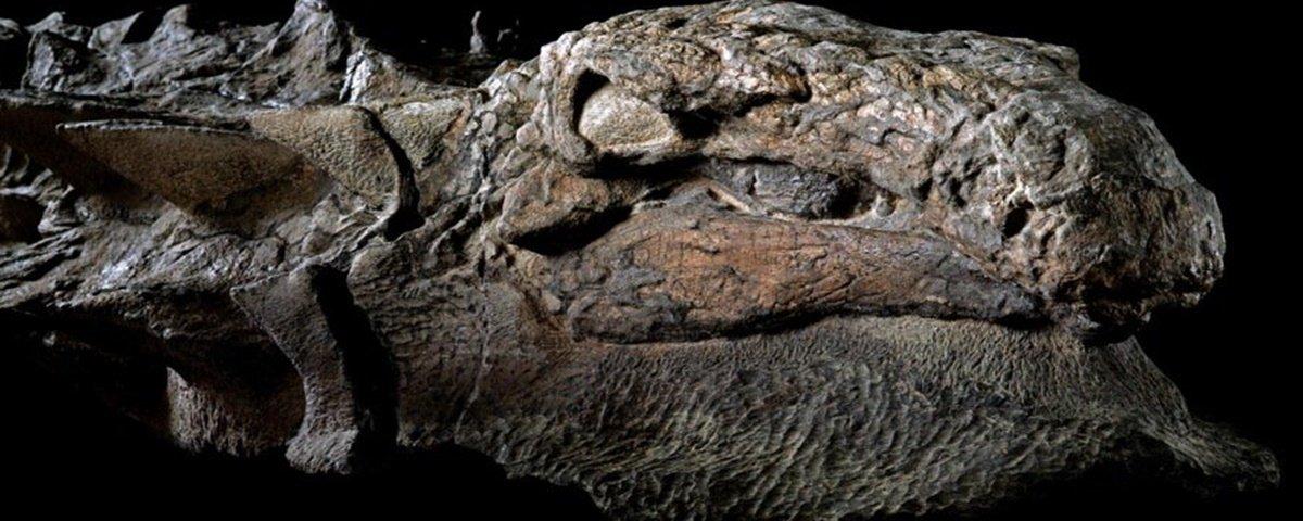 Dinossauro 'mumificado' é exposto em museu do Canadá