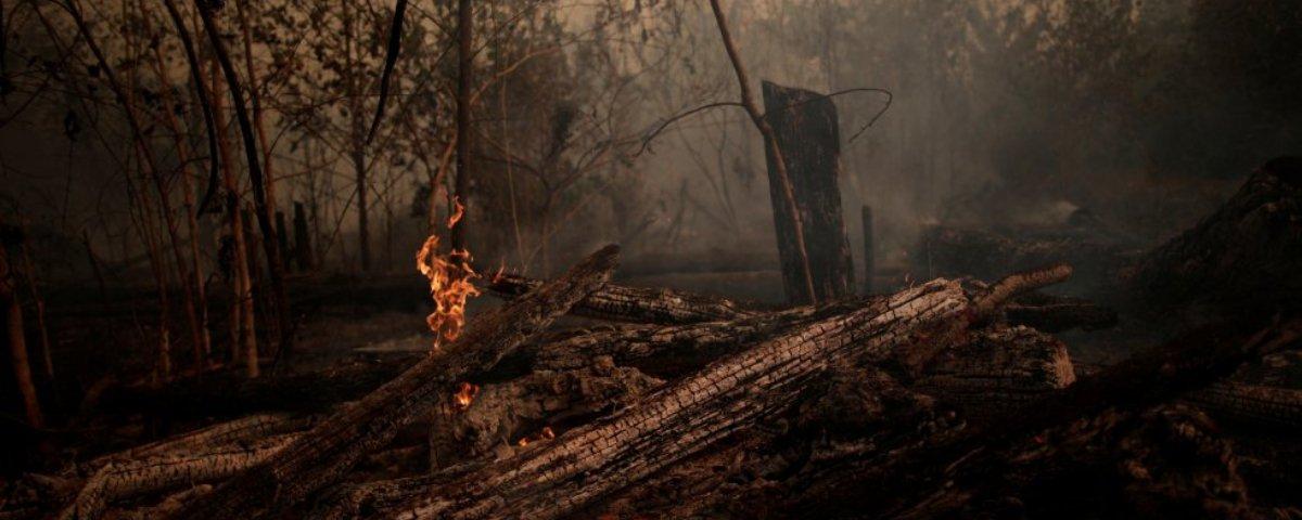 Afinal Como Fica A Amazônia Pós Queimadas Mega Curioso