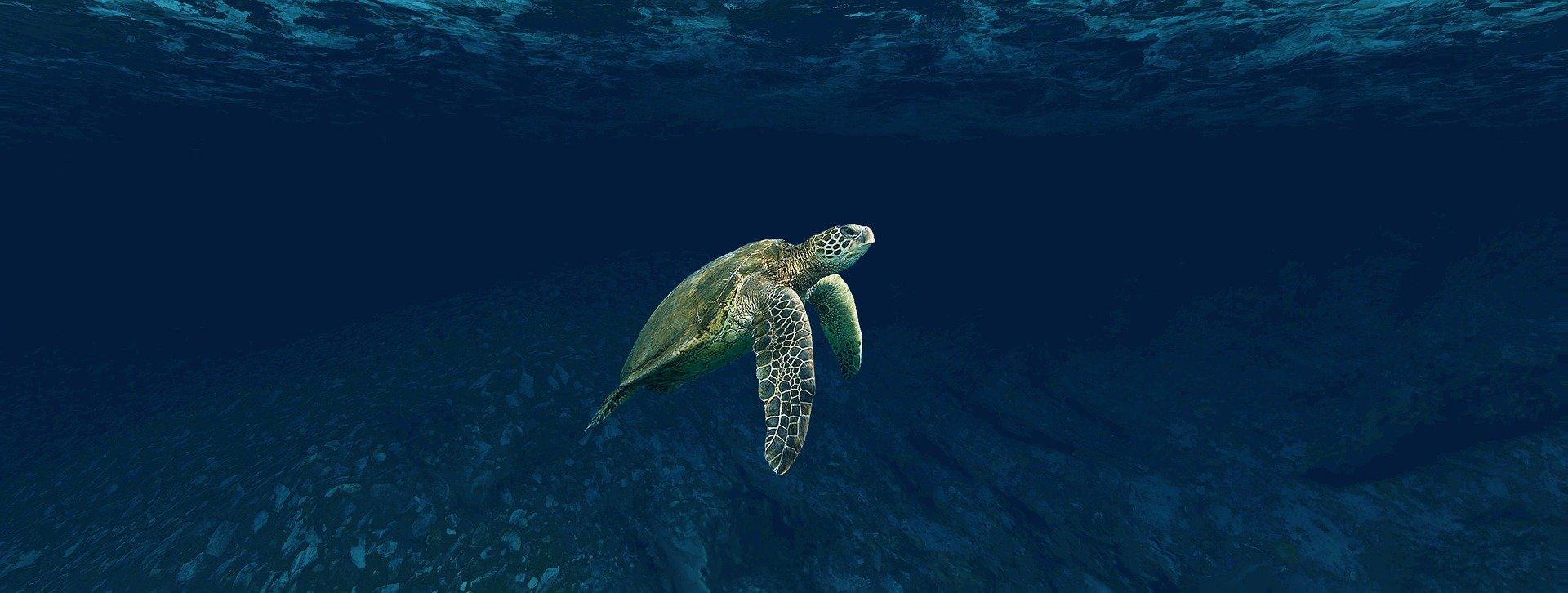 Tartarugas sentem cheiro de comida em plástico, dizem cientistas