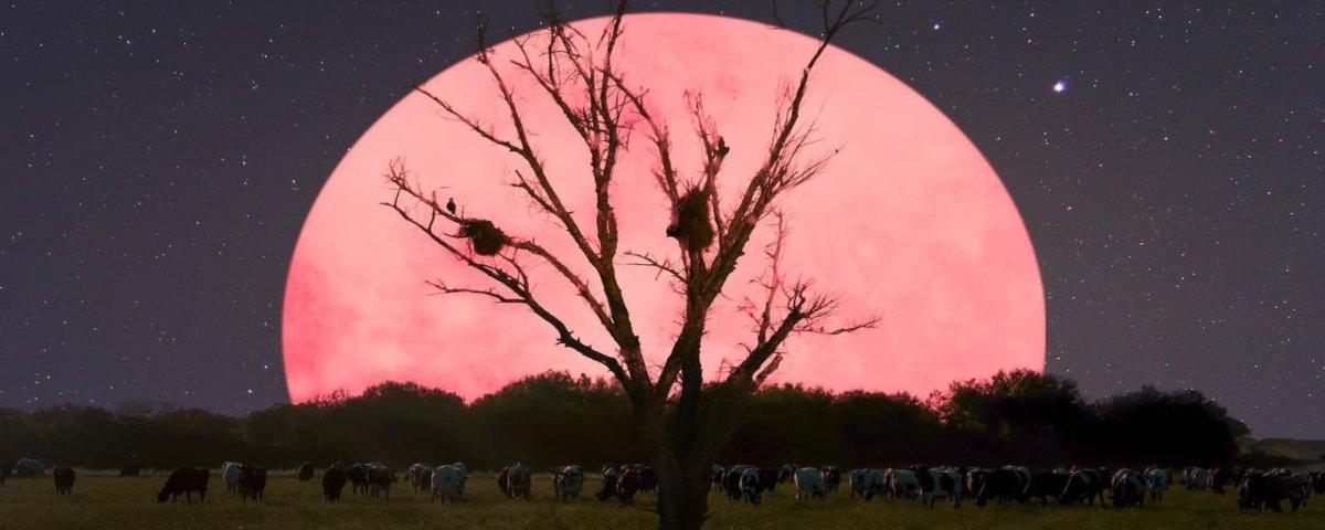 Fenômeno da Superlua Rosa será visível hoje (07) em todo o planeta
