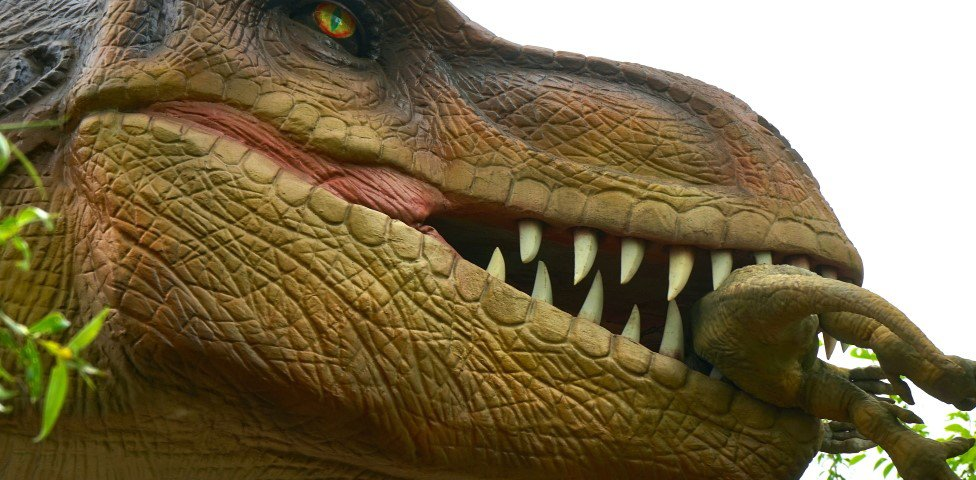 Tiranossauro Rex não conseguia correr, apesar das pernas longas