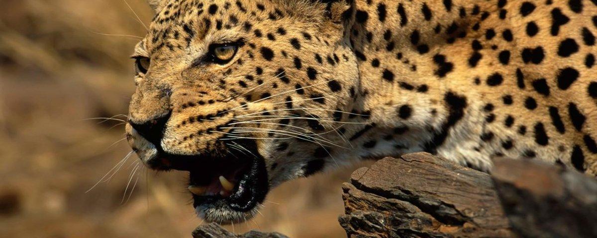 Conheça as feras africanas mais selvagens do reino animal