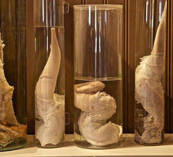 Conheça o museu na Islândia que é totalmente dedicado ao pênis