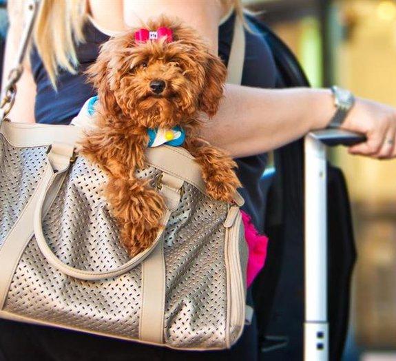 Cães e gatos terão direito a passaporte brasileiro para viajar