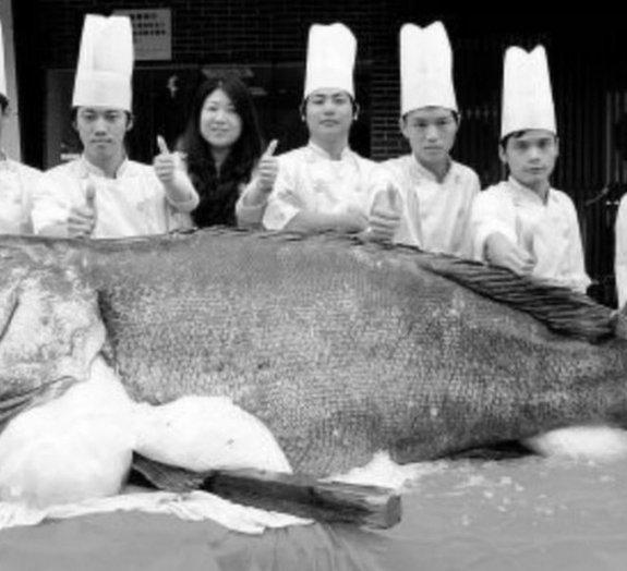 Pescadores capturam peixe gigante de 310 quilos na China