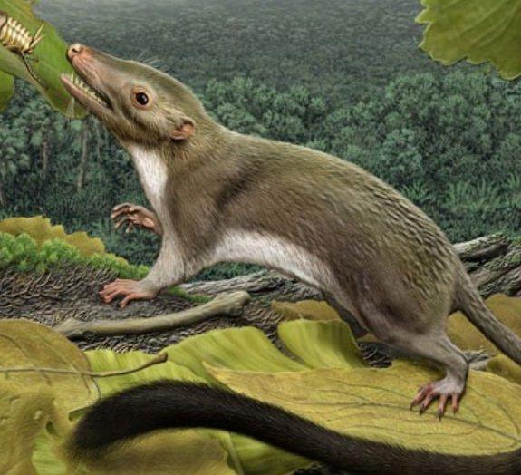 Pesquisa revela o momento em que os mamíferos começaram a dominar a Terra