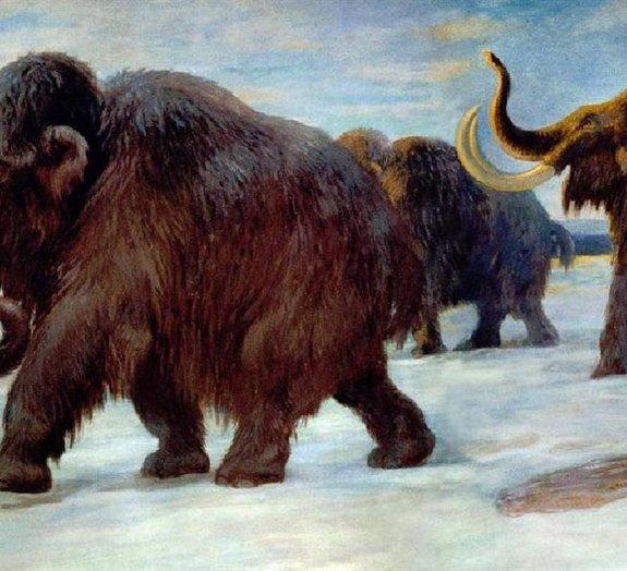 Cientistas querem trazer de volta 22 animais extintos