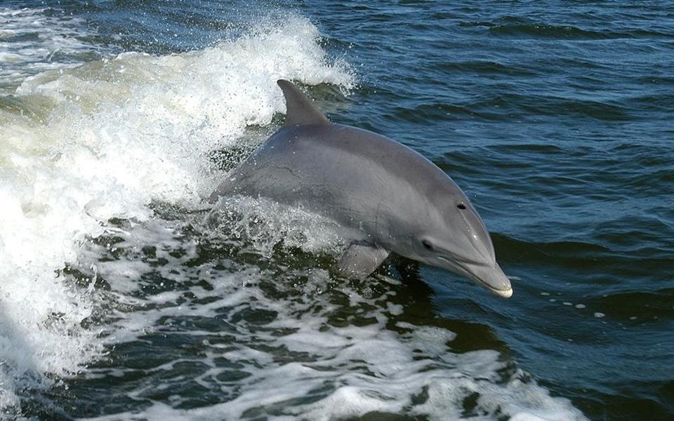 Golfinhos assassinos teriam escapado da Marinha Ucraniana, diz jornal russo