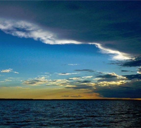 Pesquisadores descobrem nova espécie de peixe no Rio Negro