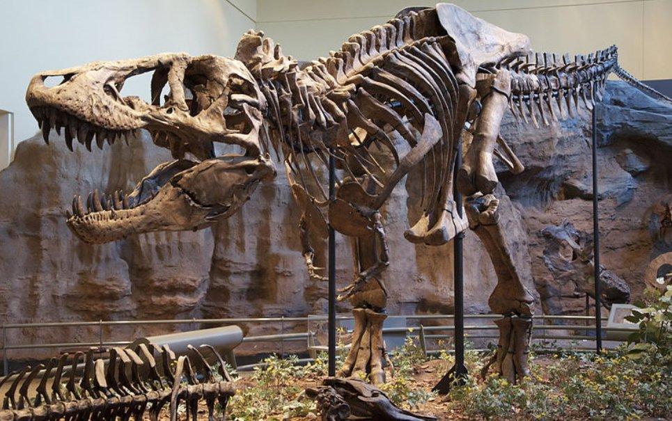 Você se arriscaria a apostar uma corridinha com um T-Rex?