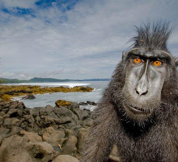 Conheça o fotógrafo que encara animais selvagens para cliques incríveis!