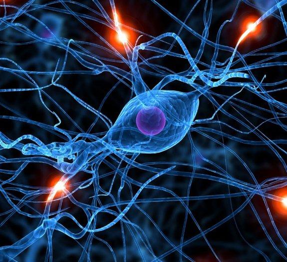 Transplante de células-tronco melhora aprendizado e memória