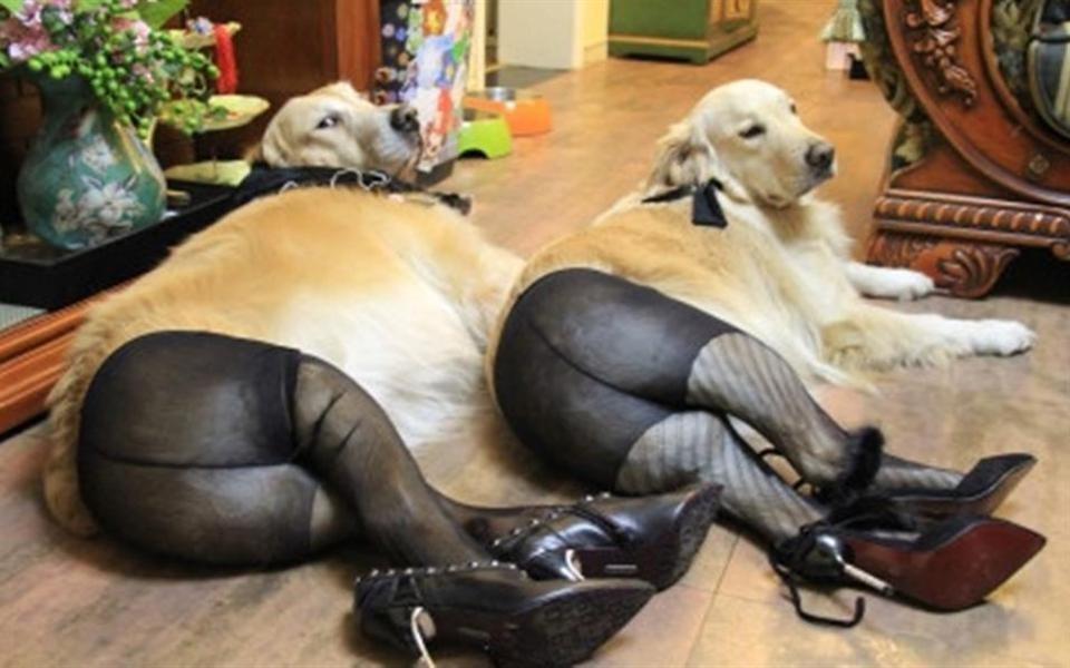 Cães vestindo meia-calça viram meme na China