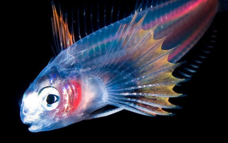 7 magníficas fotos tiradas de animais luminosos no fundo do mar