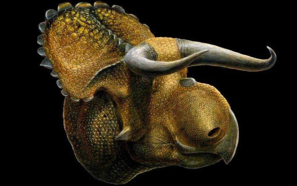 Fósseis de um novo tipo de dinossauro foram encontrados nos EUA