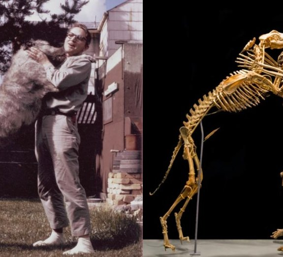 Universidade exibe esqueletos de professor com seu cachorro favorito