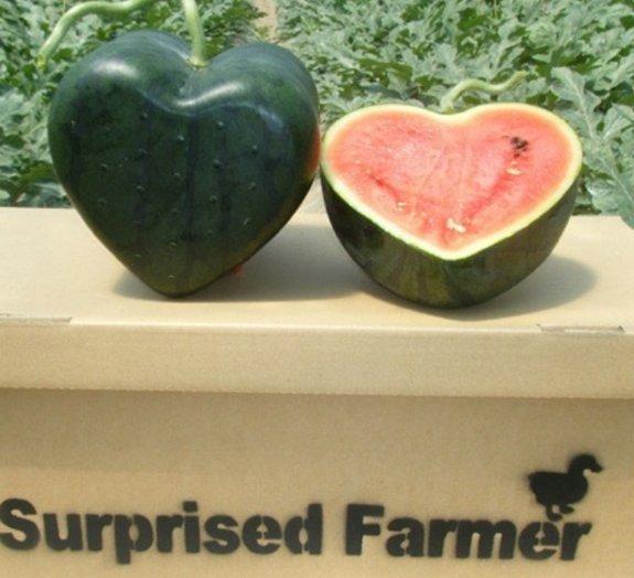 Japão inova na criação de diferentes formatos de melancias