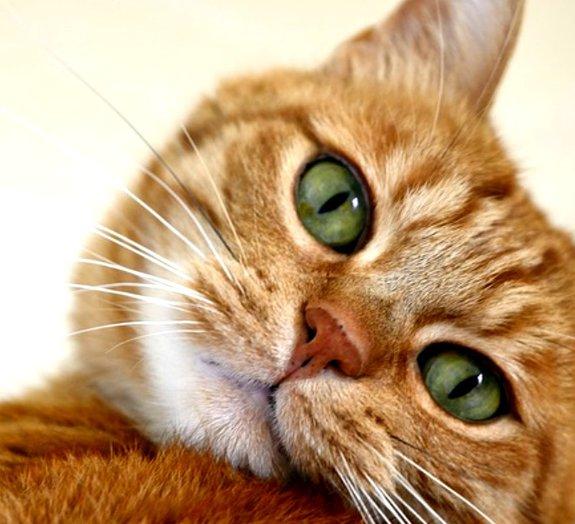 13 dos melhores GIFs de gatos de todos os tempos