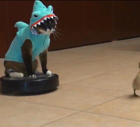 Gato vestido de tubarão persegue pato em cima de aspirador de pó
