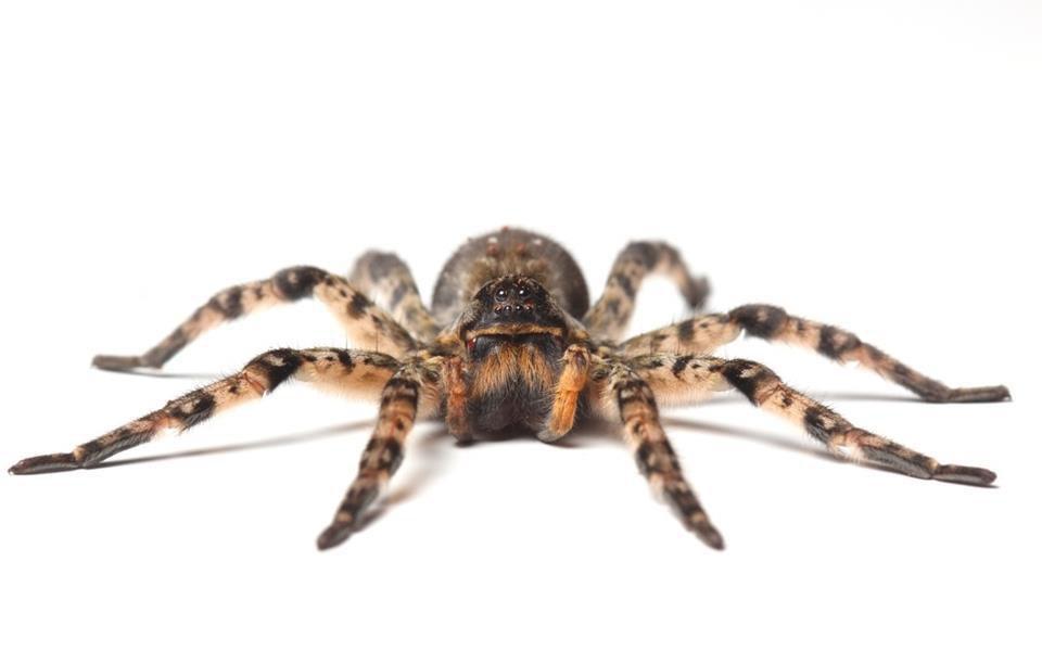 Você sabia que as aranhas possuem personalidade própria?