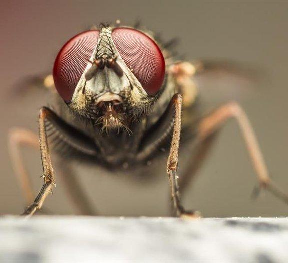 Você sabia que o tempo passa mais devagar para as moscas?