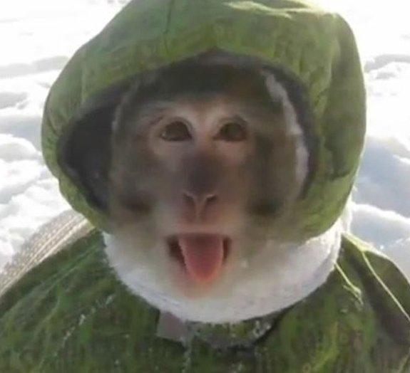 Macaco russo vestido de criança se diverte na neve [vídeo]