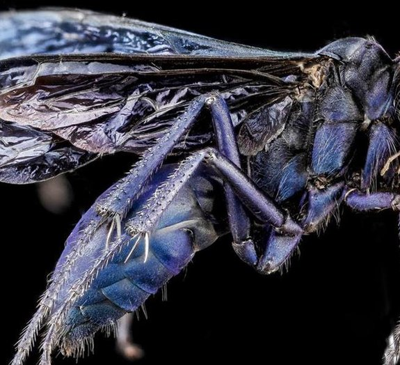 Serviço americano mantém galeria incrível de insetos e aranhas