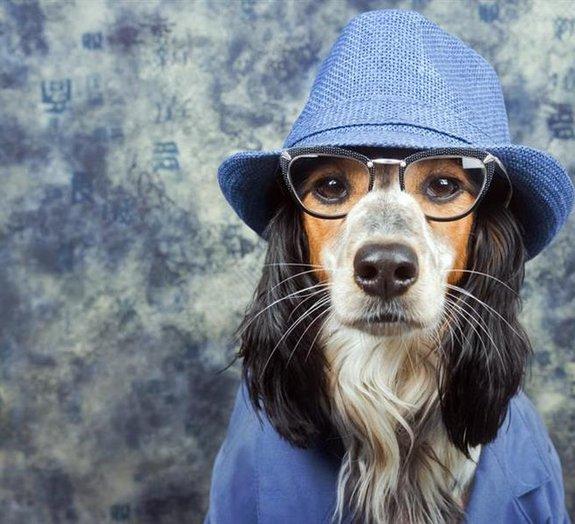 Incrível! 6 comportamentos extremamente humanos identificados nos animais