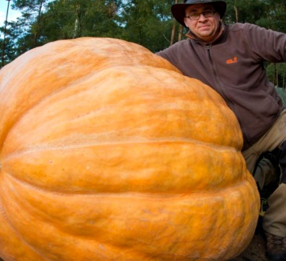Agricultor afirma que abóbora gigante de sua plantação ganha 5 kg por dia