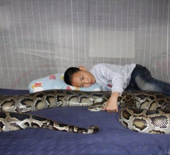 Chinês de 13 anos dorme com uma cobra píton de 100 quilos