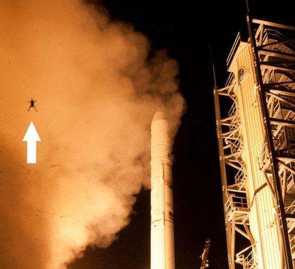 Sapo voador é flagrado em foto de lançamento de foguete