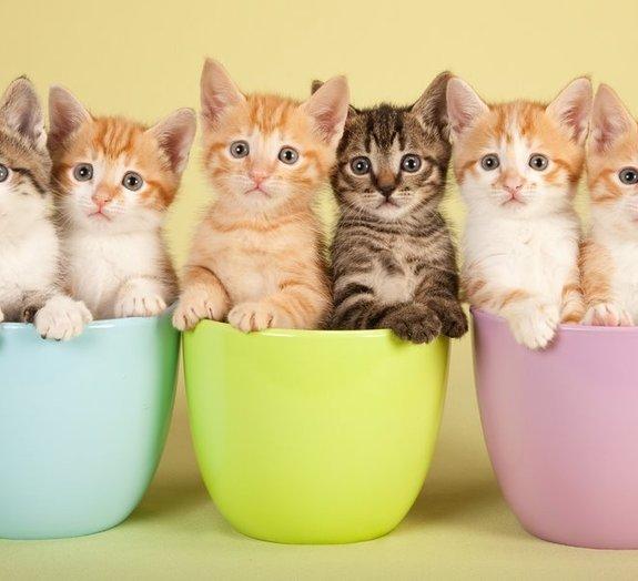 'Brinde': 2 filhotes de gato são enviados por engano em caixa de computador