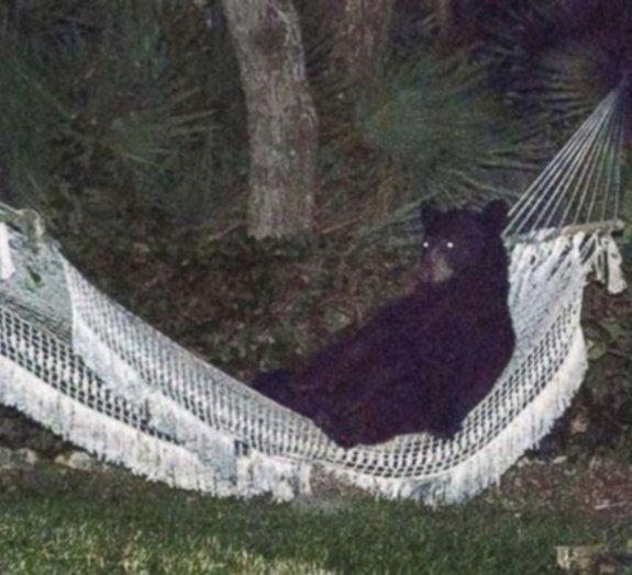Nos EUA, moradores flagram urso descansando em rede [vídeo]