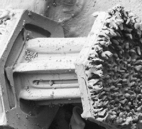 Maluco: floco de neve parece vírus mutante ao ser aumentado em 50 mil vezes