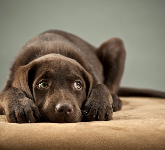 Como acalmar seu cão em dias de festas?