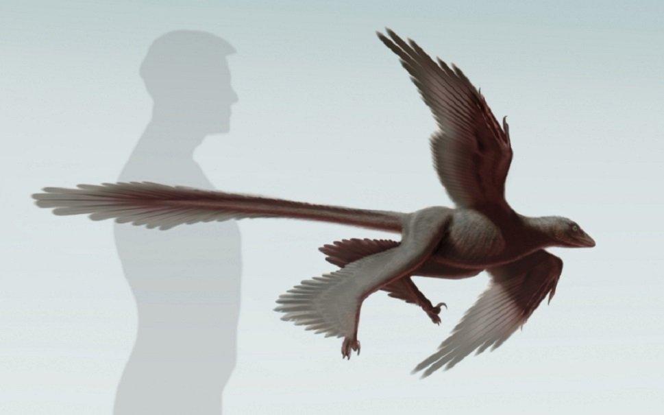 Dinossauro com quatro asas dá pista sobre evolução dos pássaros